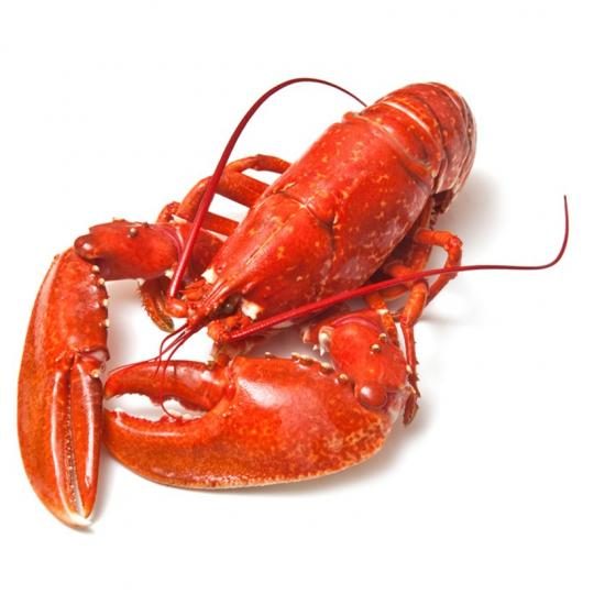 Langouste, homard, langoustine, cigale de mer